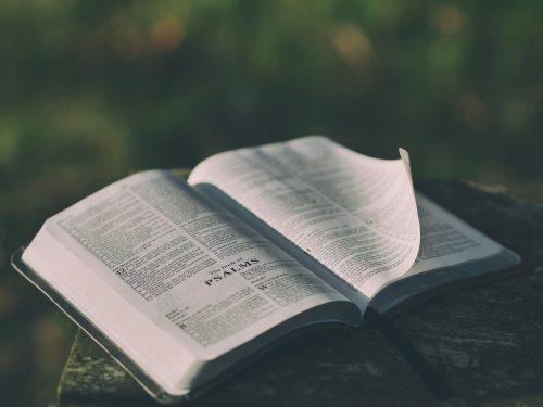 Genesis 8-11 Deep Diving Bible Study